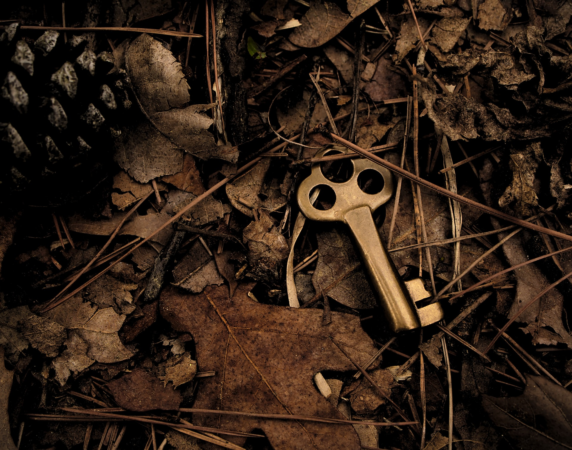 A golden key hidden among the dry leaves and twigs